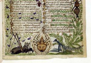 Bugs in Medieval Manuscripts