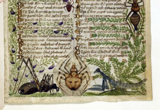 Bugs in Medieval Manuscripts